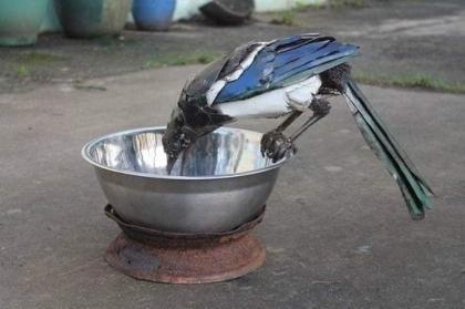 Decorative Metal Bird